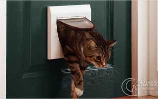 Как сделать дверь для кошки своими руками?