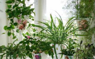 Как повесить цветы на пластиковое окно