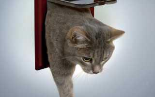 Как сделать в двери проход для кошки?