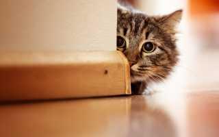 Как защитить стены от кошек